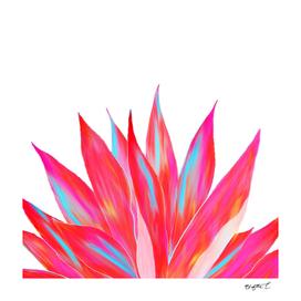 Sunny Agave Fringe Illustration