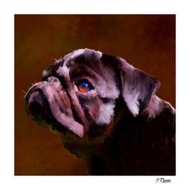 Dog: Pug