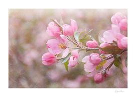 AFE Spring Blossoms