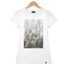 AFE Allium