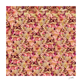 Hortensia blooms, floral pattern