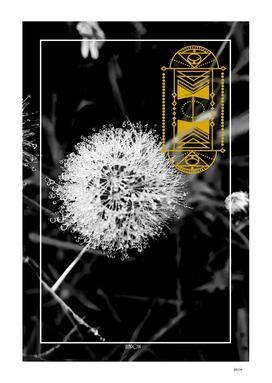 ETHNIC dandelion