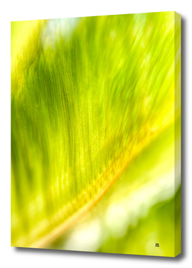 The Divine Frond