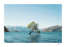 That tree in the middle of the lake