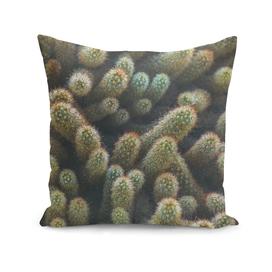 Botanical Gardens - Cactus #596