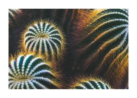 Botanical Gardens - Cactus #667