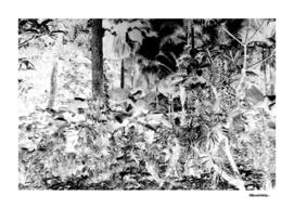 Singapore Bot. Garden 1 – Negative