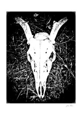 Deer Skull II