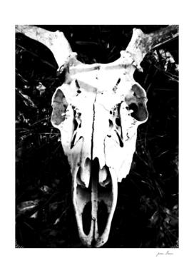 Deer Skull IV