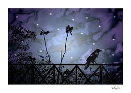 Fantasy Dark Night Scene Illustration