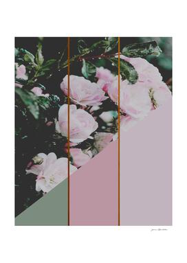 Pink Roses Palette