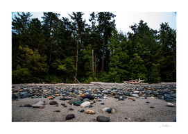 Beach Forest