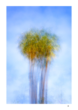 Fine Art Of The Palm Tree