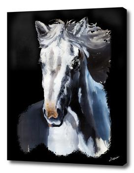 Wild White Horse from the Dark