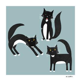 Black and White Tuxedo Cats