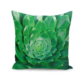 Botanical Gardens - Succulent #686