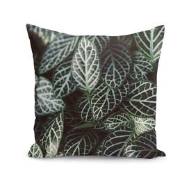 Botanical Gardens - Zebra Leaf #398
