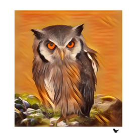 Owl in an orange night