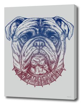 Gritty Bulldog
