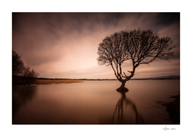 The Kenfig Tree