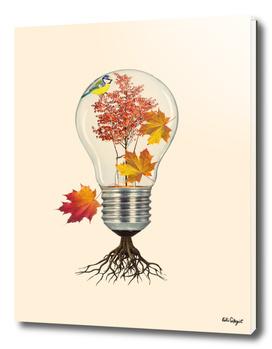 fall (autumn)