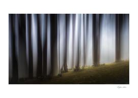 Spooky woodland