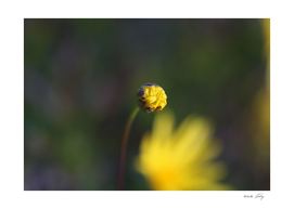 Speck of Yellow