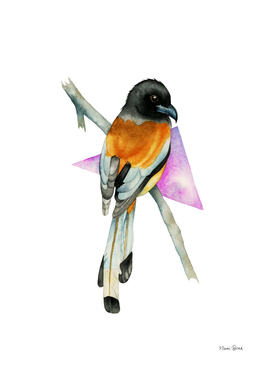 Oriole Bird with Triangle Watercolor Painting
