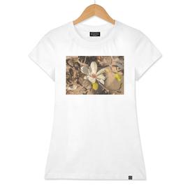 Magnolia series 1