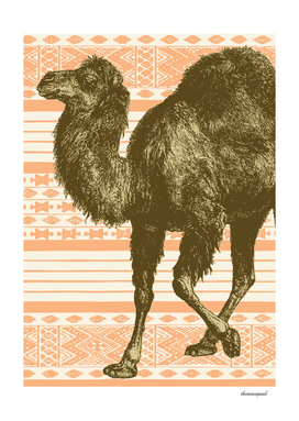 Bazaar Camel Apricot