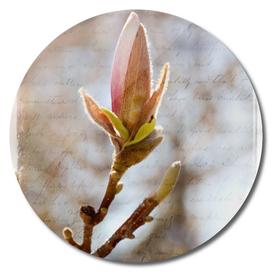 AFE Magnolia