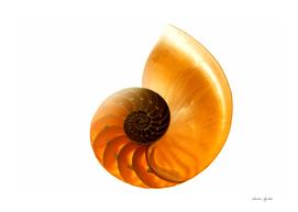 Shell. sea mollusk
