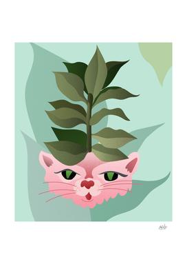 Kittyplant