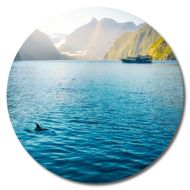 Morning sun glow and dolphins at Milford Sound