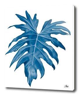 Blue palm1