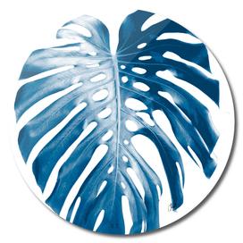 Blue palm3