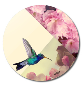humming bird in love