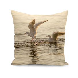 Two seagulls on a lake