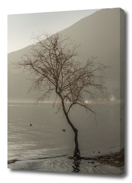Stark tree in morning mist 2