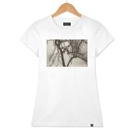 Shadow tree 2