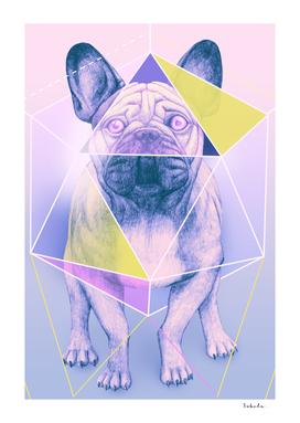 Cosmic bulldog