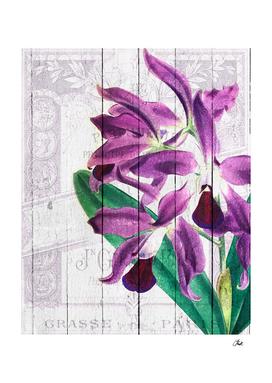 Orchid Purple Paris