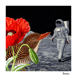 Bird on the moon #digitalcollage