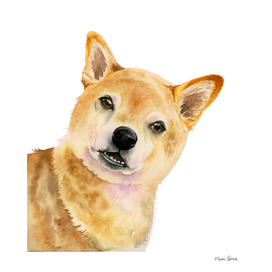 Peak A Boo | Shiba Inu Watercolor Painting