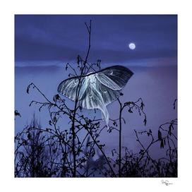 Luna Nights Violet
