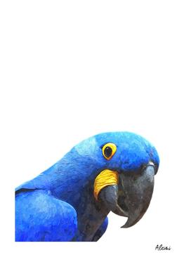 Blue Parrot Portrait