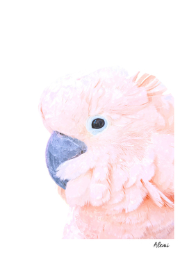 Pink Cockatoo Portrait