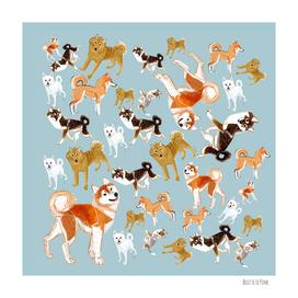 Year of the Dog: Japanese Dog Breeds