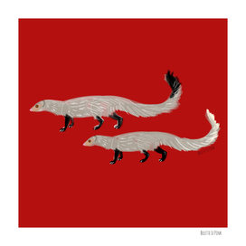 Put this mongoose in Red (Herpestes)