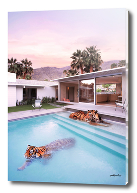 Palms Srings Tiger
